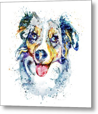 Border Collie  Metal Print by Marian Voicu
