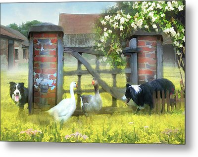 Border Patrol  Metal Print by Trudi Simmonds