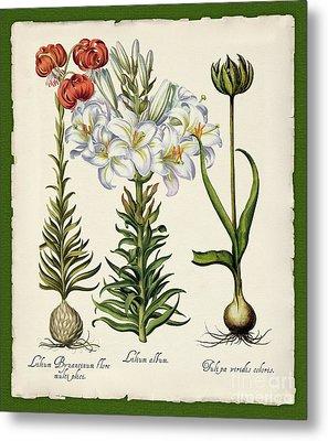 Botanica Nostalgia IIi Botanical Study Metal Print by Tina Lavoie