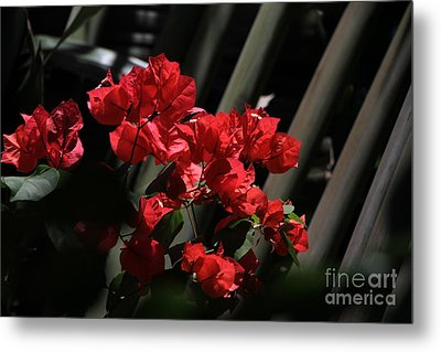 Metal Print featuring the photograph Bougainvilleas by Edward R Wisell