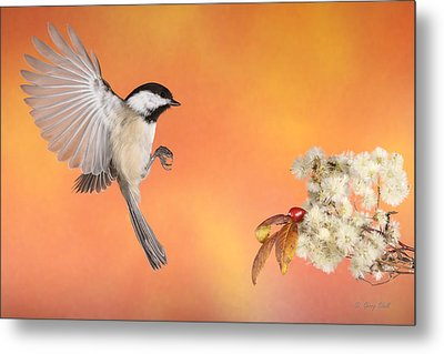Metal Print featuring the photograph Braking For The Rose Hip by Gerry Sibell