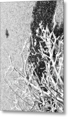 Branch In Lake Ice With Snow Black And White  Metal Print by Randy Steele