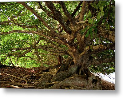Branches And Roots Metal Print by James Eddy