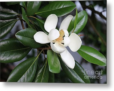 Bright Magnolia With Leaves Metal Print