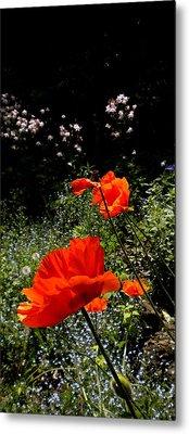 Bright Orange Metal Print by Renate Nadi Wesley
