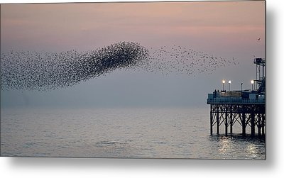 Brighton Starling Murmuration Metal Print by Simon Dack