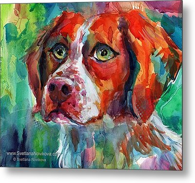 Brittany Spaniel Watercolor Portrait By Metal Print