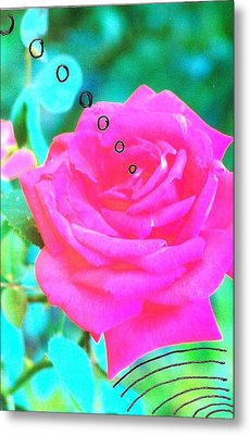 Metal Print featuring the photograph Broadcasting Rose by Rod Ismay