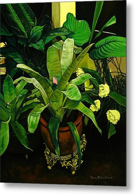 Bromeliad Metal Print by Doug Strickland