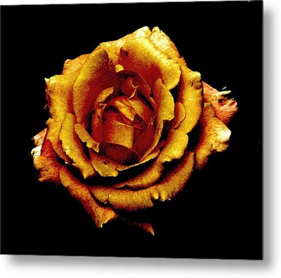 Bronzed Rose Metal Print by Angela Davies