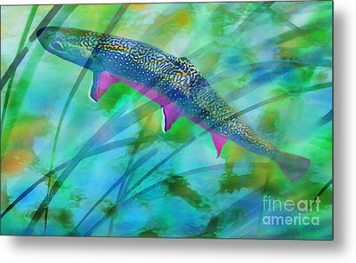 Brook Trout In The Stream Metal Print by Terril Heilman