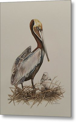 Brown Pelican And Chicks Metal Print by Laurie Tietjen