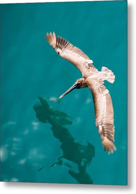 Brown Pelican Offshore Metal Print by Bill Perry