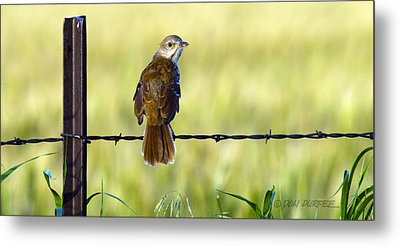 Metal Print featuring the photograph Brown Thrasher by Don Durfee