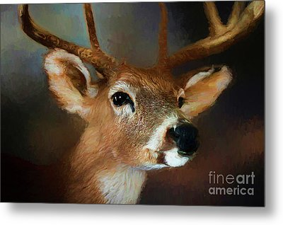 Metal Print featuring the photograph Buck by Darren Fisher