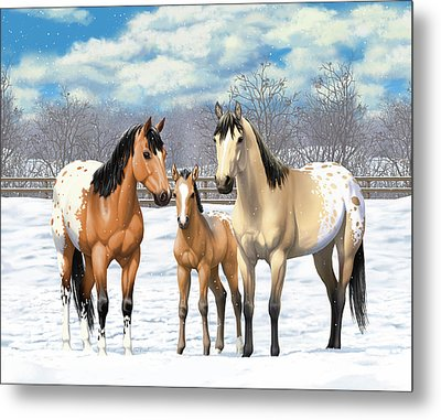 Buckskin Appaloosa Horses In Winter Pasture Metal Print