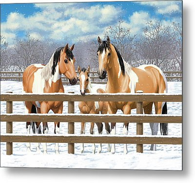 Buckskin Paint Horses In Snow Metal Print by Crista Forest