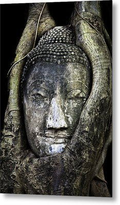 Buddha Head In Banyan Tree Metal Print by Adrian Evans
