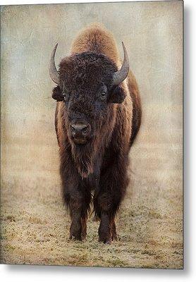 Buffalo Bull Metal Print
