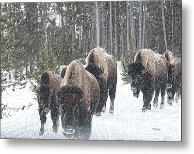 Buffalo Herd Emerges From The Snowy Yellowstone Mist Metal Print