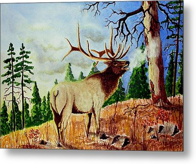 Bugling Elk Metal Print by Jimmy Smith
