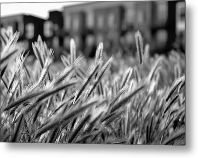 Buildings Are Growing Behind The Grass Metal Print by Alessandra RC