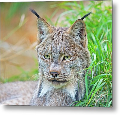 Metal Print featuring the photograph Built In Hearing Aid.. by Nina Stavlund