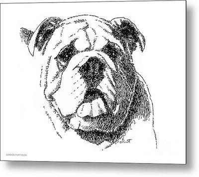 Bulldog-portrait-drawing Metal Print by Gordon Punt