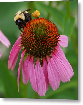Busy Bee Metal Print by Jean Haynes