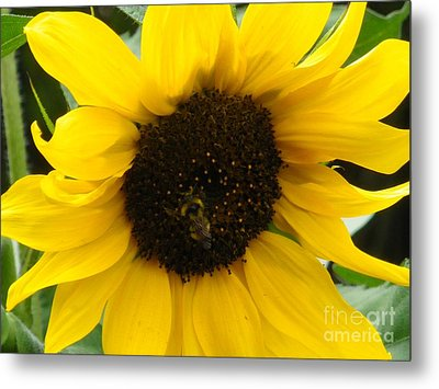 Busy Bee Metal Print by Sonya Chalmers