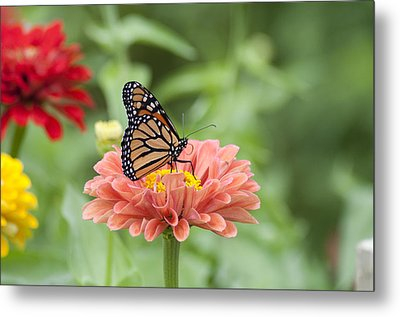 Butterflies And Blossoms Metal Print by Bill Cannon