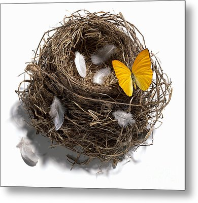 Butterfly And Nest Metal Print