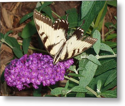 Butterfly Beauty Yellow Metal Print by Kicking Bear  Productions