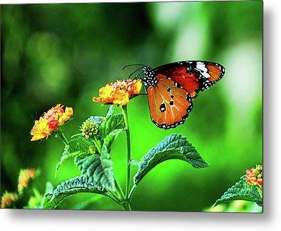 Butterfly Metal Print by Chaza Abou El Khair