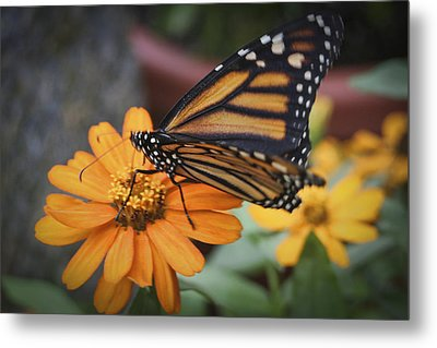 Butterfly Metal Print by Christina Durity