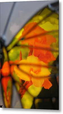 Butterfly Florals  Collection D Metal Print by Debra     Vatalaro