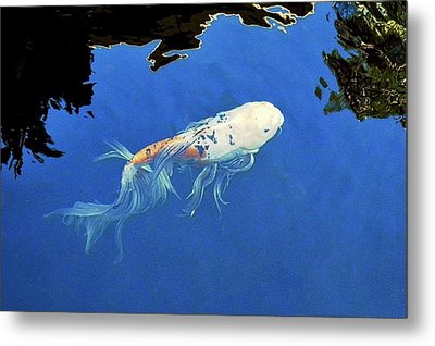 Butterfly Koi In Blue Sky Reflection Metal Print