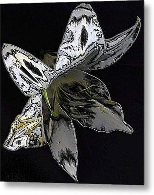 Metal Print featuring the photograph Butterfly Lily by Carolyn Repka