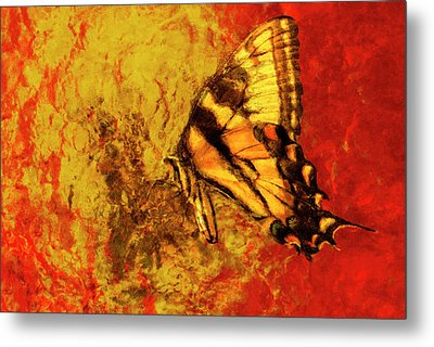 Butterfly Yellow Orange Red Metal Print