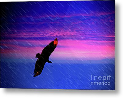 Buzzard In The Rain Metal Print by Al Bourassa