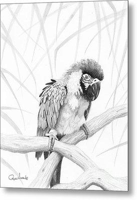Bw Parrot Metal Print by Phyllis Howard
