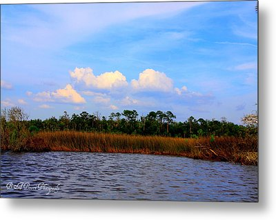 Metal Print featuring the photograph Cabbage Palms And Salt Marsh Grasses Of The Waccasassa Preserve by Barbara Bowen