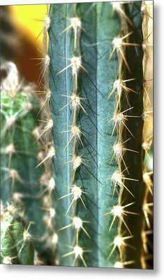Metal Print featuring the photograph Cactus 3 by Jim and Emily Bush