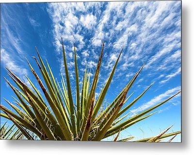 Cactus And Blue Sky Metal Print by Amyn Nasser