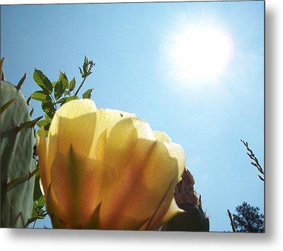 Cactus Enjoying Sun Light Metal Print