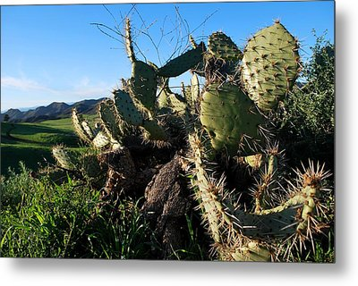 Metal Print featuring the photograph Cactus In The Mountains by Matt Harang