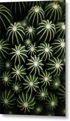 Cactus Metal Print by T*tomorrow