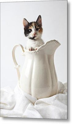 Calico Kitten In White Pitcher Metal Print