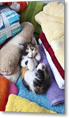 Calico Kitten On Towels Metal Print