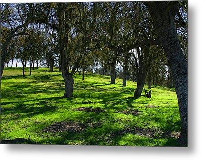 California Oak Woodland With Dappled Sunlight Metal Print